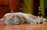 crean-vino-especial-para-gatos_niupd