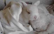 criando-un-conejo-bebe_3pwcs