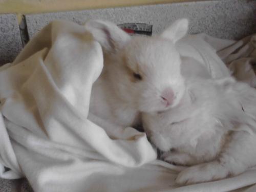Criando un conejo bebé