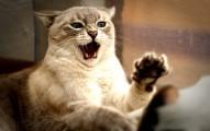 cuando-acaricio-a-mi-gato-me-muerde-y-arana_uexc4