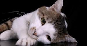 cuando-los-gatos-se-deprimen_pvxd2