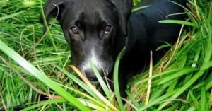 cuando-los-perros-comen-hierbas_vz0id