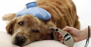 cuando-los-perros-tienen-fiebre_hnz1d