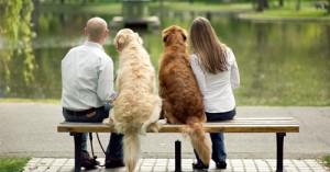 cuando-un-perro-es-educado-por-varias-personas_eu3lg