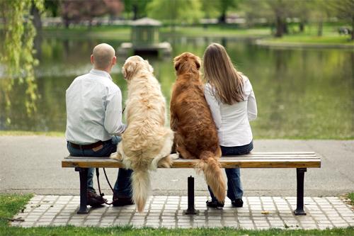 Cuando un perro es educado por varias personas