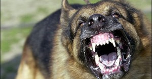 cuando-un-perro-es-entrenado-como-arma_own2k