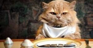 cuantas-veces-al-dia-debe-comer-mi-gato_daw3p