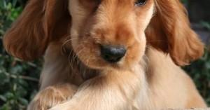 cuantas-veces-debe-salir-un-perro-a-hacer-sus-necesidades_yt3rz