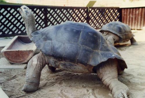 ¿Cuántos años vivirá mi tortuga?