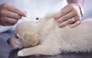 cuidados-a-las-mascotas-cuando-han-ingerido-algun-objeto_7ivme