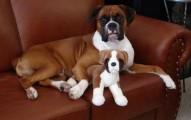 cuidados-a-tener-en-cuenta-con-un-perro-esterilizado_5f9m4