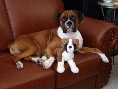 Cuidados a tener en cuenta con un perro esterilizado canal mascotas - Perros para tener en casa ...