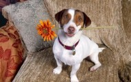 cuidados-basicos-para-que-un-perro-tenga-salud-y-felicidad_7bijy