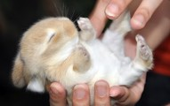 cuidados-basicos-para-un-conejo-recien-nacido_dfrpe