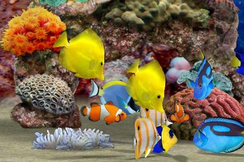 Fotos e imagenes de peces con movimiento imagui for Peces tropicales