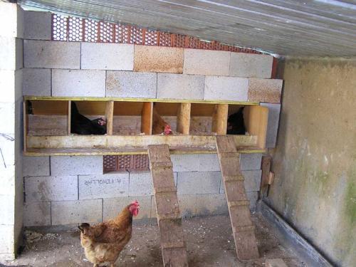 Cuidados de las gallinas ponedoras canal mascotas for Costruire ecologico
