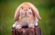 cuidados-de-los-conejos-al-salir-de-viaje-por-vacaciones_1eyg5