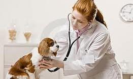 cuidados-para-tener-un-perro-sano-y-feliz_ga2lj