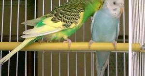 cuidando-a-las-aves-para-que-vivan-por-mas-tiempo-en-casa_yfsv7