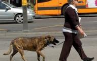 cuidando-a-nuestro-perro-de-accidentes-en-la-calle_1xb89