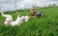 dejar-al-perro-en-una-residencia-para-mascotas-al-salir-de-viaje_2qo6r