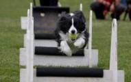 deportes-y-ejercicios-para-los-perros_zgba7