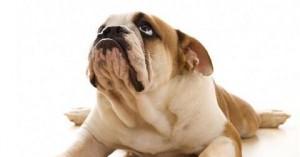 desarrollan-terapia-genetica-que-cura-la-diabetes-de-los-perros_86u0c