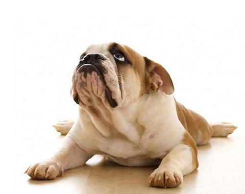 Desarrollan terapia genética que cura la diabetes de los perros