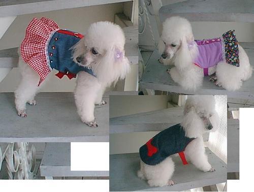 Detalles para las prendas caninas