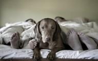 dormir-con-las-mascots-es-bueno_9pqxi