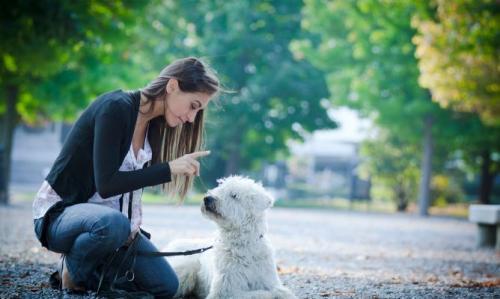 Educación de las mascotas y dueños preocupados