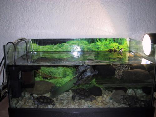 El acuario de la tortuga canal mascotas for Todo para acuarios
