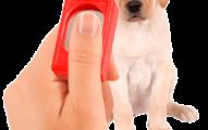 el-clicker-para-entrenar-perros_40uch