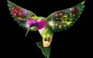 el-colibri-el-ave-mas-pequena-del-mundo_tpd4s