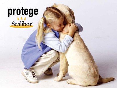 El collar Scalibor para perros