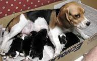 el-destete-de-los-cachorros_g4jd8