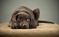 el-estres-y-la-ansiedad-en-los-perros_s0rxg