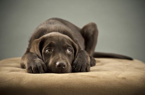 El estrés y la ansiedad en los perros