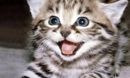 el-gato-es-la-mejor-mascota-que-se-puede-tener_u5s41