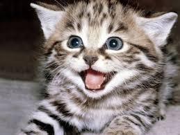 El gato es la mejor mascota que se puede tener