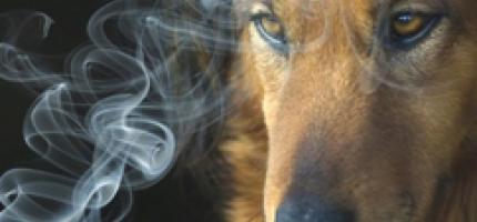 el-humo-del-cigarro-tambien-dana-a-las-mascotas_nhx42