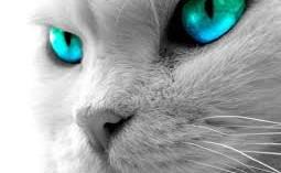 el-mejor-cuidado-para-los-ojos-de-los-gatos_gi8kd