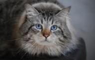 el-mejor-gato-contra-las-alergias_5mgov