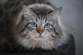 El mejor gato contra las alergias