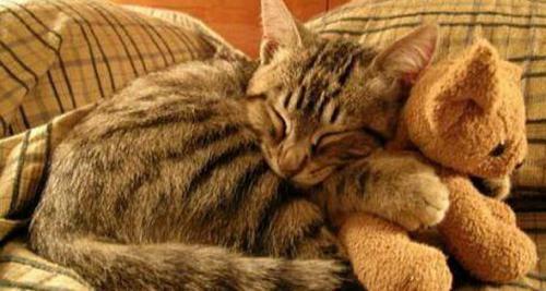 El mejor gato de compañía