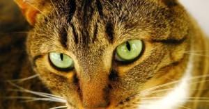 el-misterio-de-los-ojos-del-gato_qz4gv