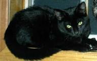 el-mito-de-los-gatos-negros_dgsv8