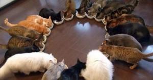 el-nuevo-gato-convivencia-de-varios-felinos-en-el-hogar_6zb5c