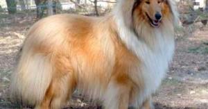 el-pelo-de-los-perros_parjo