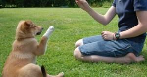 el-perro-educado-es-reflejo-de-duenos-maduros_dla8w